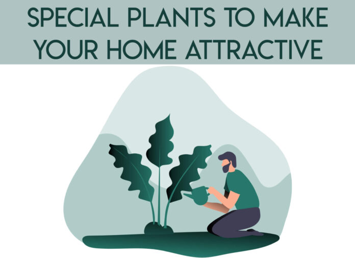 special plants to maker your home attractive