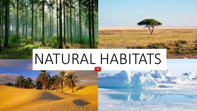 Habitat In Miniature Format