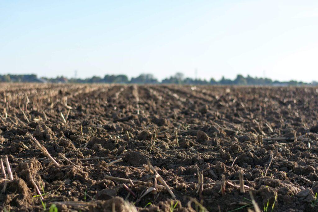 Enrich Your Soil